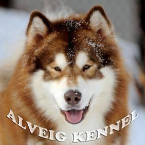 Питомник Аляскинских маламутов Альвейг